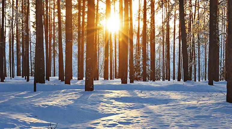 Receso invernal